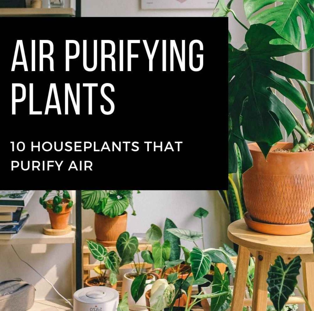 Air Purifying Plants: 10 Houseplants That Purify Air