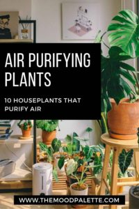 Read more about the article Air Purifying Plants: 10 Houseplants That Purify Air